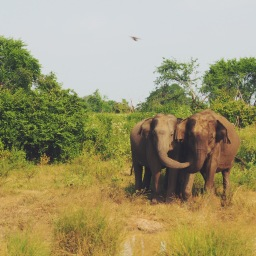 Shall we safari?